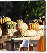 Wart Pumpkins Canvas Print