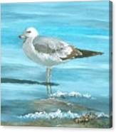 Wary Seagull Canvas Print