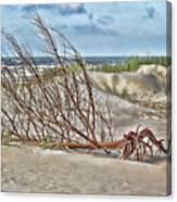 Washed Ashore - Sketch Canvas Print