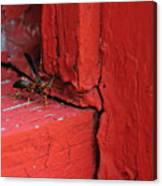 Wasp And Red Canvas Print