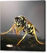 Wasp At Work Canvas Print