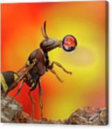 Wasp Blowing Bubble 160605d Canvas Print