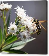 Wasp Closeup Canvas Print