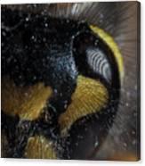 Wasp Eye Canvas Print
