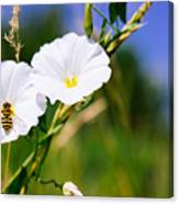 Wasp On A White Flower Canvas Print