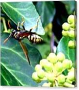 Wasp On The Ivy Canvas Print
