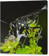 Wasp Visit Canvas Print