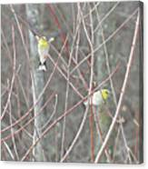 Watch Me One Bird In Flight Canvas Print