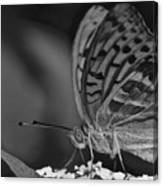 Watchful Butterfly Canvas Print