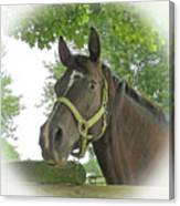Watchful Mare Canvas Print