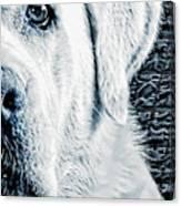 Watching U Canvas Print