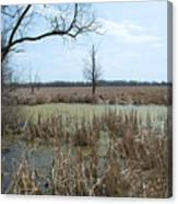 Water And Cattails Canvas Print