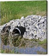 Water And Culverts Canvas Print
