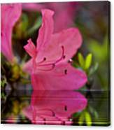 Water Azalea Canvas Print