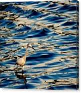 Water Bird Series 11 Canvas Print