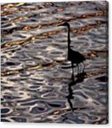 Water Bird Series 17 Canvas Print