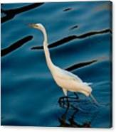 Water Bird Series 30 Canvas Print
