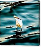 Water Bird Series 33 Canvas Print