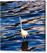 Water Bird Series 9 Canvas Print