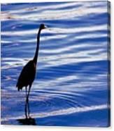Water Bird Series Canvas Print