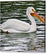Water Bird With Notches Canvas Print