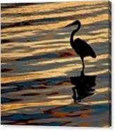 Water Birds Series 3 Canvas Print