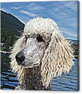 Water Dog Canvas Print