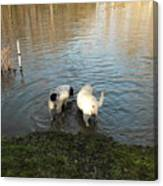 Water Dogs Canvas Print