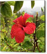 Water Drops On Flower Canvas Print