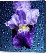 Water Drops On Purple Iris Canvas Print