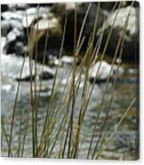 Water Flowing 1 Canvas Print