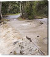 Water Flowing In The North Fork Canvas Print
