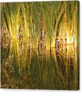Water Grass In Sunset Canvas Print