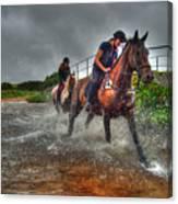 Water Horses Canvas Print