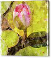 Water Hyacinth Bud Wc Canvas Print