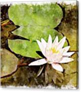 Water Hyacinth Two Wc Canvas Print