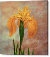 Water Iris - Textured Canvas Print
