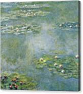 Water Lilies 21 Canvas Print