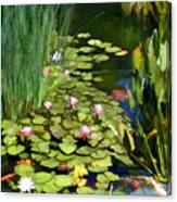 Water Lilies And Koi Pond Canvas Print