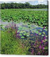 Lotus Flowers Forever Canvas Print