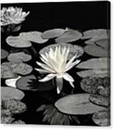 Water Lilies In Black And White Canvas Print