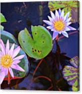 Water Lilies In Kauai Canvas Print