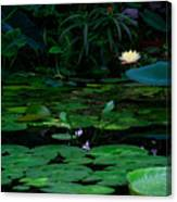 Water Lilies In The Pond Canvas Print