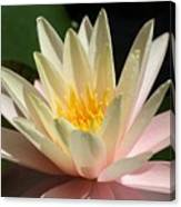 Water Lilly 1 Canvas Print