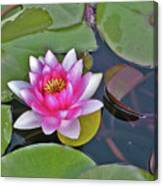 Water Lilly  And Lilly Pads Canvas Print