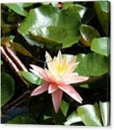 Water Lilly With Dragonfly Canvas Print