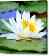 Water Lily - Digital Painting Canvas Print