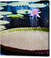 Water Lily - Water-platter Textured Canvas Print