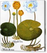 Water Lily, 1613 Canvas Print