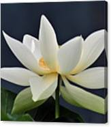Water Lily 36 Canvas Print